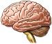 AOVE podría prevenir el alzheimer